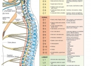 Spine Surgery in India, Spine Surgery Mumbai India