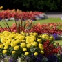 Plant Bulbs Online in India